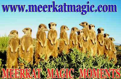 FREE TO SEND UNIQUE IN THE WORLD WILD AND FREE MEERKAT GREETING CARDS FROM THE MEERKAT MAGIC MOMENTS COLLECTION!
