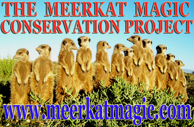 meerkat suricate meerkats suricates wildlife tour The Meerkat Magic Conservation Project Oudtshoorn Western Cape Klein Karoo Little Karoo Garden Route Area South Africa Accommodation links - THE MEERKAT MAGIC CONSERVATION PROJECT - MEERKAT MAGIC MOMENTS -  OUDTSHOORN WESTERN CAPE SOUTH AFRICA - EXPERIENCE WILD AND FREE MEERKAT MAGIC WITH GRANT M. MC ILRATH - A.K.A - THE MEERKAT MAN - A PROFESSIONAL CONSERVATION BIOLOGIST AND INTERNATIONALLY PUBLISHED WILDLIFE RESEARCHER / WILDLIFE PROTECTOR - INVOLVED WITH MEERKAT / SURICATE FILMS WITH THE BBC, NATIONAL GEOGRAPHIC, DISCOVERY CHANNEL AND MANY MORE SINCE 1993!