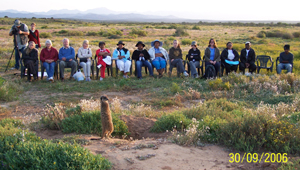 meerkat suricate meerkats suricates wildlife tour Meerkat Magic conservation project Oudtshoorn Western Cape Klein Karoo Little Karoo Garden Route Area South Africa Accommodation links 381
