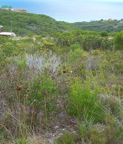 Investment opportunity in conservancy land, Plot A, Dana Bay, Western Cape, South Africa.
