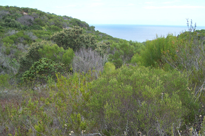 Investment opportunity in conservancy land, Plot B, Dana Bay, Western Cape, South Africa.