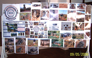 Part of The Meerkat Magic Conservation Project Educational Display