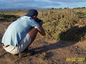 Jeremy Jowell � photojournalist, who visited The Meerkat Magic Conservation Project in The Meerkat Magic Valley, photographing the Wild meerkats / suricates of The Ungulungu meerkat / suricate group around Oudtshoorn, Western Cape, South Africa. This was for media release, currently the dates and publication are unknown.