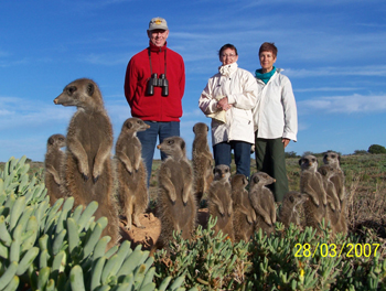 meerkat suricate meerkats suricates Meerkat Magic Tour at The Meerkat Magic Conservation Project with The Ungulungu group in The Meerkat Magic Valley Reserve Oudtshoorn, Western Cape, South Africa.