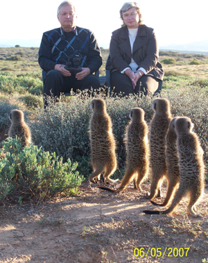 meerkat suricate meerkats suricates Meerkat Magic Tour at The Meerkat Magic Conservation Project with The Ungulungu group around Oudtshoorn, Western Cape, South Africa.