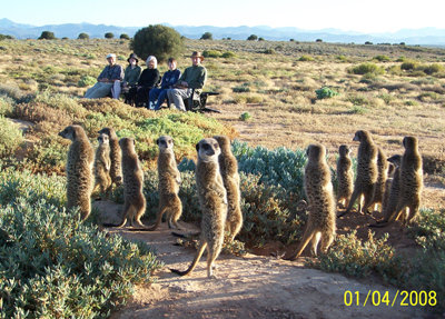 Meerkat Friendly Supporters / Meerkat Veterans at The Meerkat Magic Conservation Project  during a morning Sunrise visit to The Ungulungu wild and free meerkats / suricates living in The Meerkat Magic Valley Reserve of The Meerkat Magic Conservation Project around Oudtshoorn, Western Cape of South Africa.