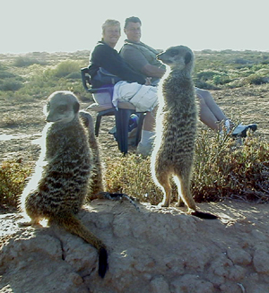 meerkat suricate meerkats suricates tour Meerkat Magic 43