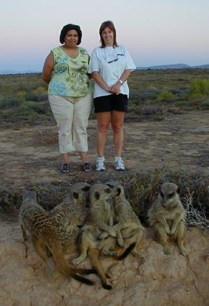 meerkat suricate meerkats suricates tour Meerkat Magic 36