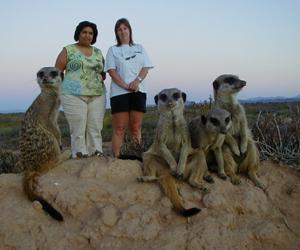 meerkat suricate meerkats suricates tour Meerkat Magic 39