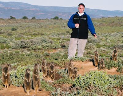meerkat suricate meerkats suricates tour Meerkat Magic 41