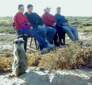 meerkat suricate meerkats suricates tour Meerkat Magic 42