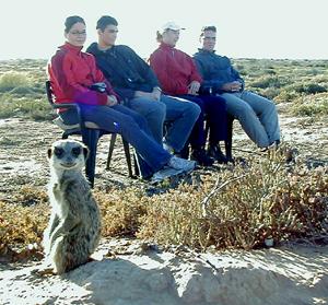 meerkat suricate meerkats suricates tour Meerkat Magic 42