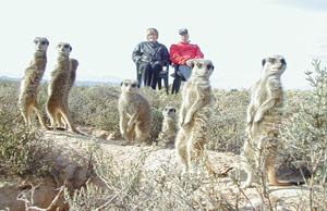 meerkat suricate meerkats suricates tour Meerkat Magic 48