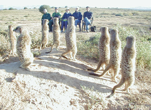 meerkat suricate meerkats suricates tour Meerkat Magic 52