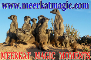 Meerkat Magic Moments 0001.jpg