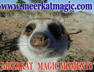 Meerkat Magic Moments 0004.jpg