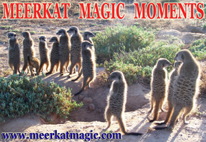 Meerkat Magic Moments 0007.jpg