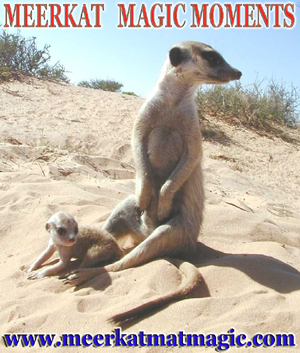 Meerkat Magic Moments 0008.jpg