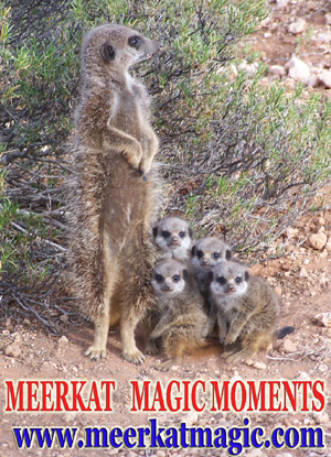 Meerkat Magic Moments 0010.jpg