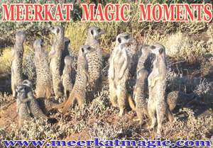 Meerkat Magic Moments 0011.jpg