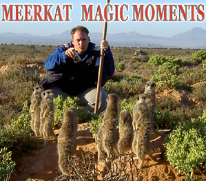 Meerkat Magic Moments 0013.jpg