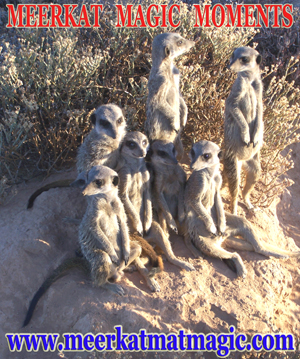 Meerkat Magic Moments 0016.jpg