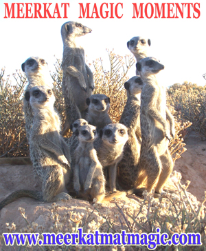 Meerkat Magic Moments 0017.jpg