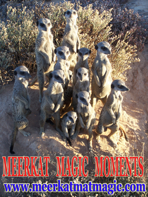 Meerkat Magic Moments 0018.jpg
