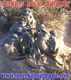 Meerkat Magic Moments 0019.jpg