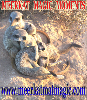 Meerkat Magic Moments 0020.jpg