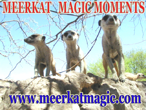 Meerkat Magic Moments 0021.jpg