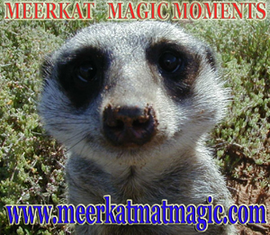 Meerkat Magic Moments 0022.jpg