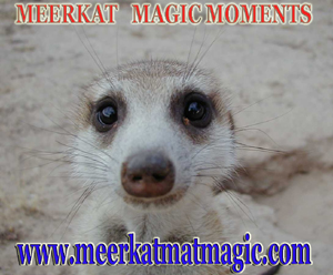 Meerkat Magic Moments 0023.jpg