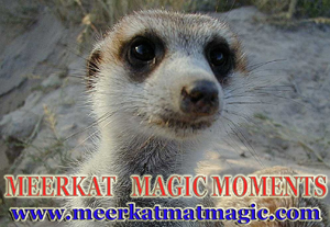 Meerkat Magic Moments 0024.jpg