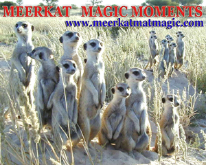 Meerkat Magic Moments 0039.jpg