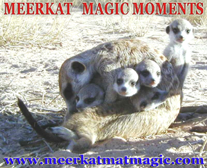 Meerkat Magic Moments 0040.jpg