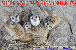 Meerkat Magic Moments 0041.jpg