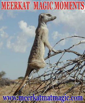 Meerkat Magic Moments 0049.jpg