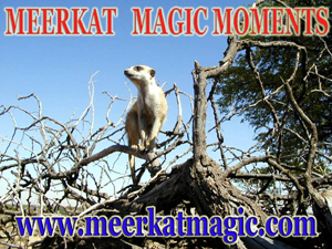Meerkat Magic Moments 0053.jpg