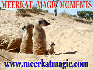 Meerkat Magic Moments 0055.jpg