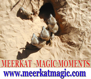 Meerkat Magic Moments 0057.jpg
