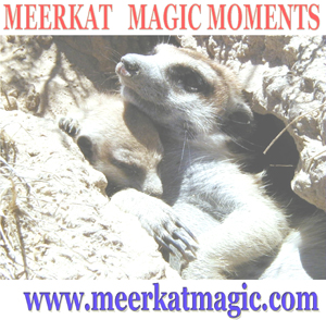 Meerkat Magic Moments 0058.jpg