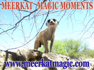 Meerkat Magic Moments 0061.jpg