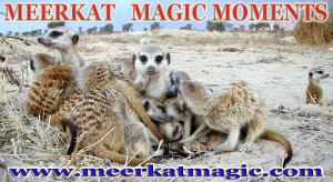 Meerkat Magic Moments 0064.jpg