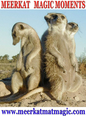 Meerkat Magic Moments 0068.jpg