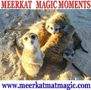 Meerkat Magic Moments 0069.jpg