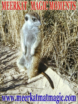 Meerkat Magic Moments 0070.jpg