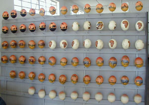A display rack of beautifully painted ostrich eggs in Oudtshoorn South Africa- where some of the Magical Meerkat Magic Merchandise is Manufactured!