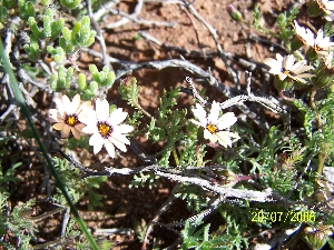 The Meerkat Magic Valley Reserve plant species flora  8.JPG