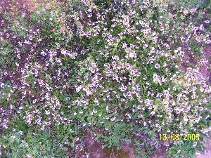 The Meerkat Magic Valley Reserve plant species flora 44.JPG